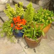 Sue and Ian\'s garden