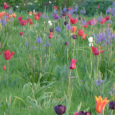 "We promised to let our Neem Tree Trust supporters know when the bulbs are looking their best in the ""Field of Dreams"" at Byde Mill, Corsham, SN13 9QH. As the […]"