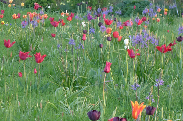 """An invitation to view the bulbs in the """"Field of Dreams"""" 2"""